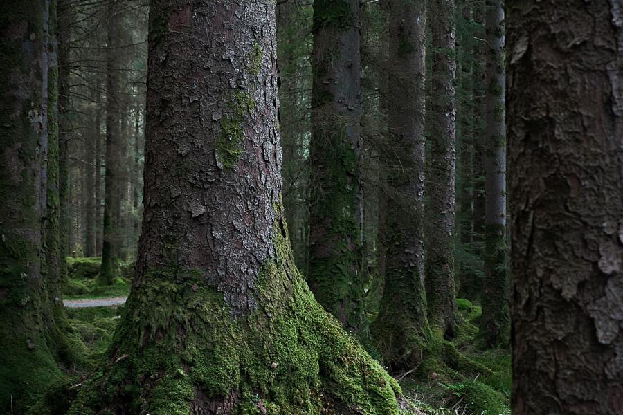Gougane Barra forest