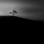 treemetry